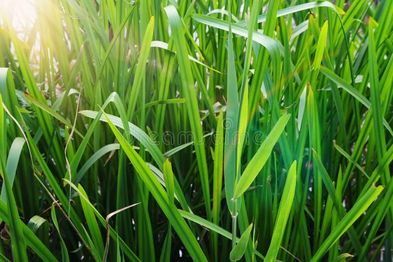 Opini?n de ?ngulo bajo la hierba fresca concepto de la libertad y de la renovaci?n imagen de archivo libre de regalías
