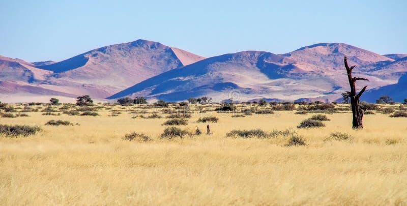Opini?n del paisaje en la cacerola de Sossusvlei en Namibia ?frica fotos de archivo