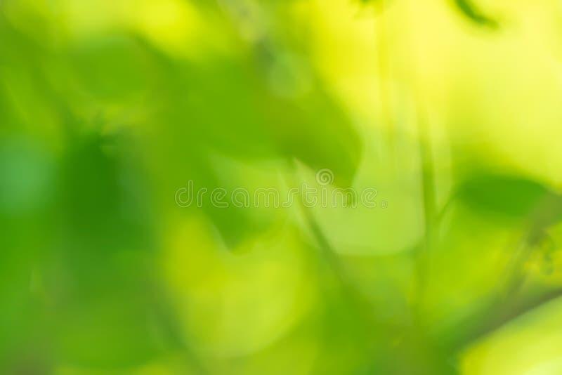 Opini?o da natureza do close up da folha verde no fundo borrado das hortali?as no jardim com espa?o da c?pia usando-se como o fun fotos de stock