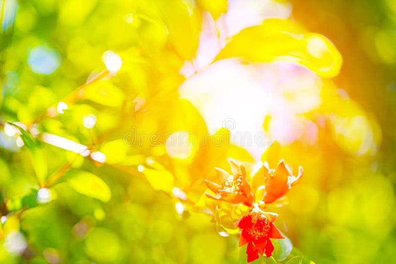 Opini?o da natureza do close up da folha verde no fundo borrado das hortali?as no jardim com espa?o da c?pia usando-se como o fun foto de stock