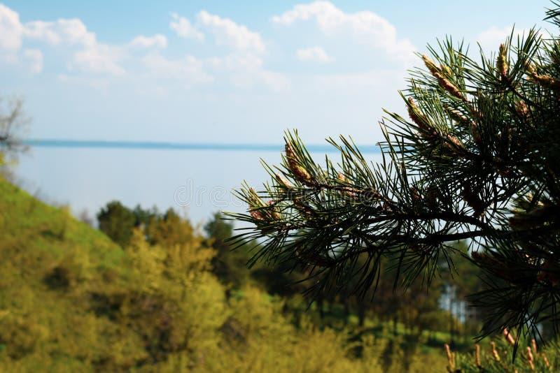 Opini?o da natureza Montanhas, rio e c?u azul Ramo verde de uma árvore no primeiro plano foto de stock