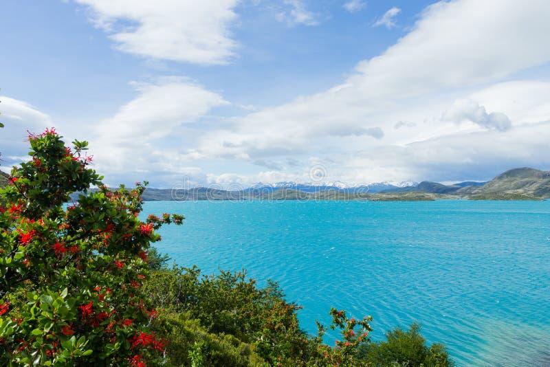 Opini?o de Pehoe do lago, Torres del Paine, o Chile foto de stock royalty free