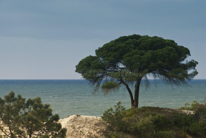 Opini?o do mar na costa portuguesa do Algarve fotografia de stock royalty free