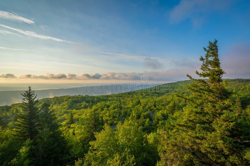 Opini?o do nascer do sol da conserva das rochas do urso em Dolly Sods Wilderness, floresta nacional de Monongahela, West Virginia imagem de stock royalty free