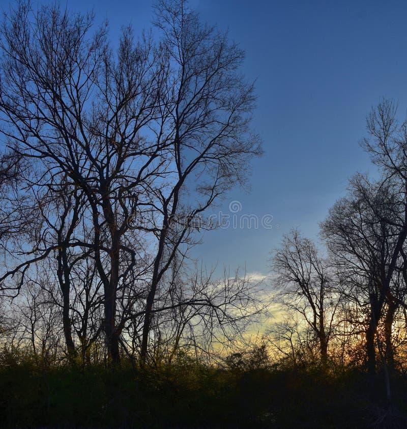 Opiniones de la puesta del sol de la oscuridad a través de ramas de árbol del invierno por Opryland a lo largo de Shelby Bottoms  imagenes de archivo
