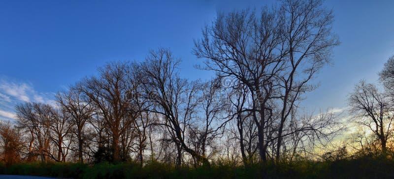 Opiniones de la puesta del sol de la oscuridad a través de ramas de árbol del invierno por Opryland a lo largo de Shelby Bottoms  imagen de archivo