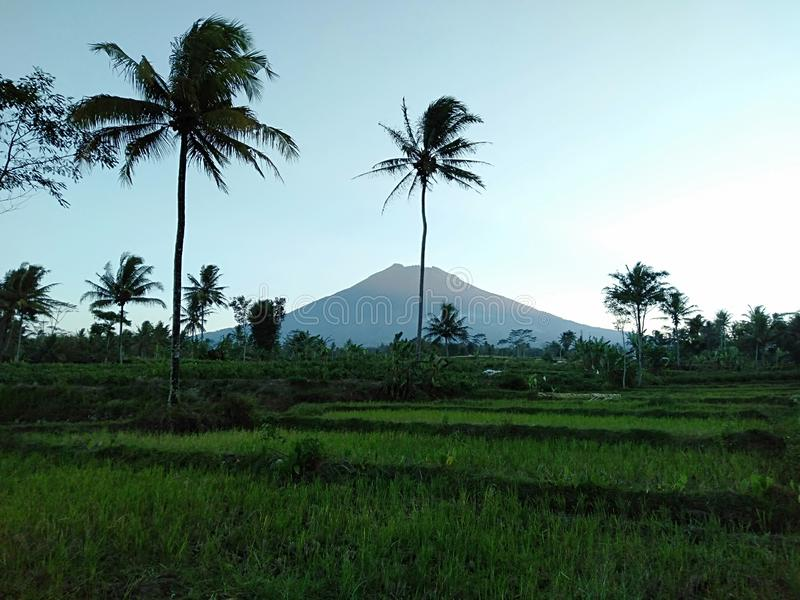 Opiniones del campo de la montaña y del arroz por la tarde foto de archivo libre de regalías