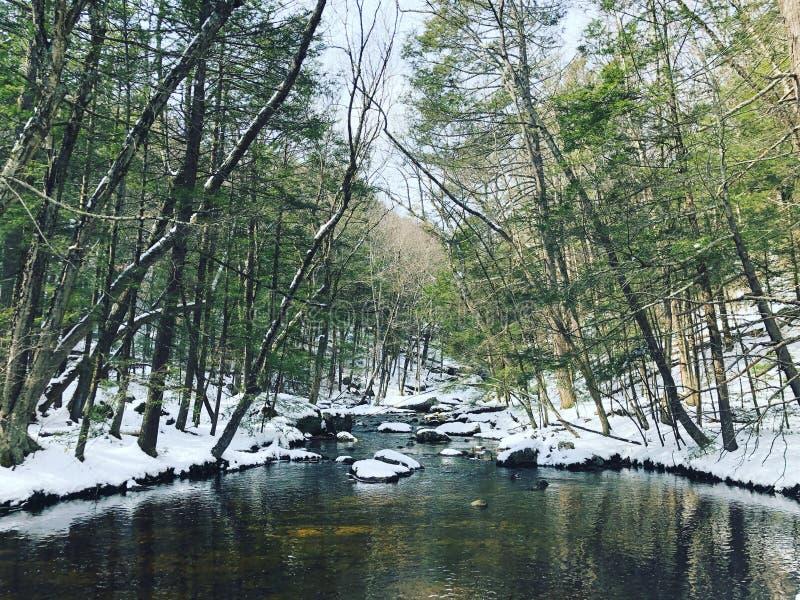 Opiniones del invierno del parque de estado de Enders fotografía de archivo