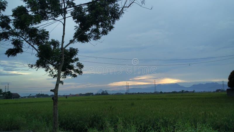 Opiniones del paisaje de los campos del arroz con el fondo hermoso de la montaña foto de archivo libre de regalías