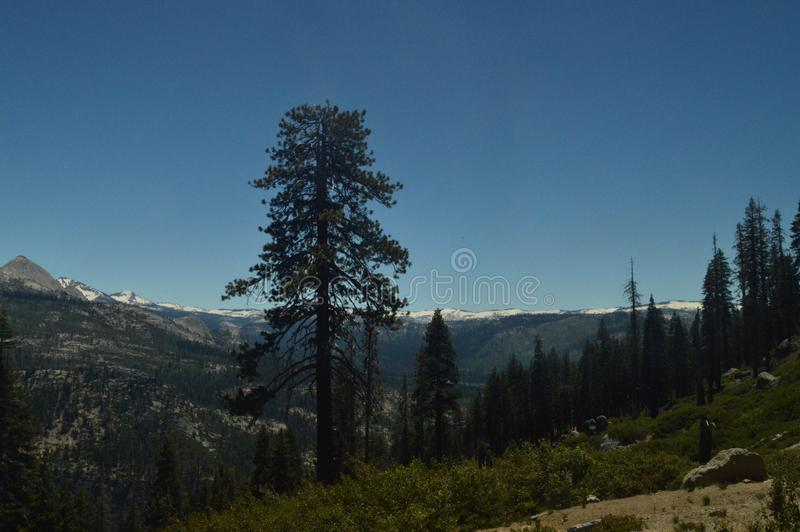 Opiniones maravillosas Forest From The Highest Part de una de las montañas del parque nacional de Yosemite Días de fiesta del via fotografía de archivo libre de regalías