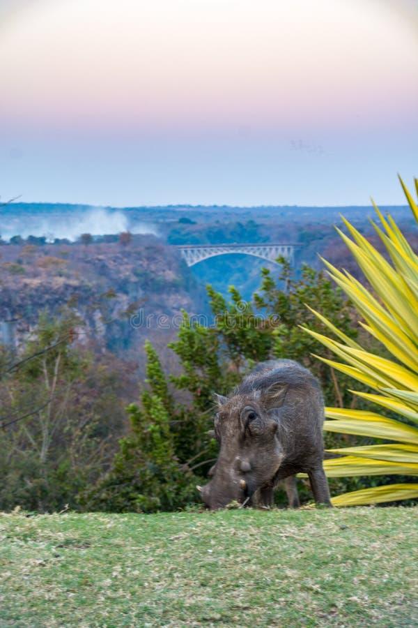 Opiniones Victoria Falls asombrosa fotografía de archivo