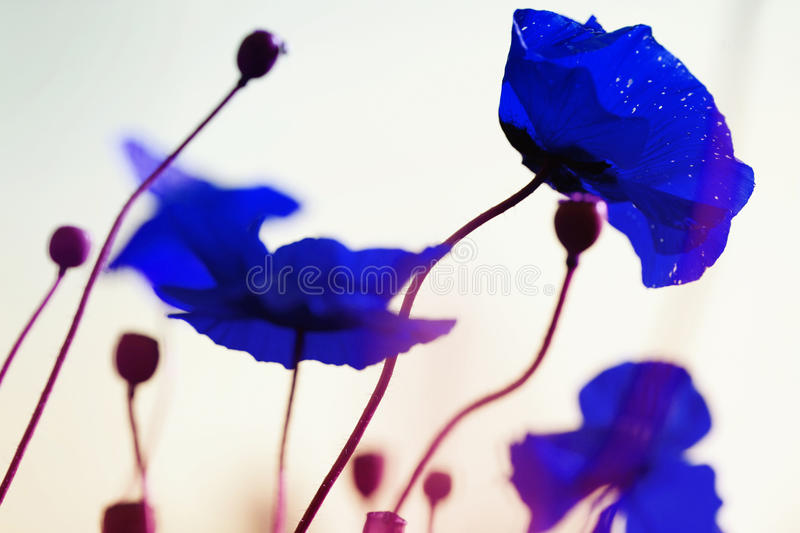 Download Opium dreams stock image. Image of blue, blooming, psychedelic - 18779047