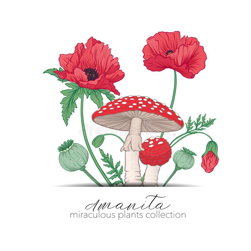 Opium poppy and amanita mushroom. Set of miraculous plants. In botanical style. Stock line vector illustration royalty free illustration