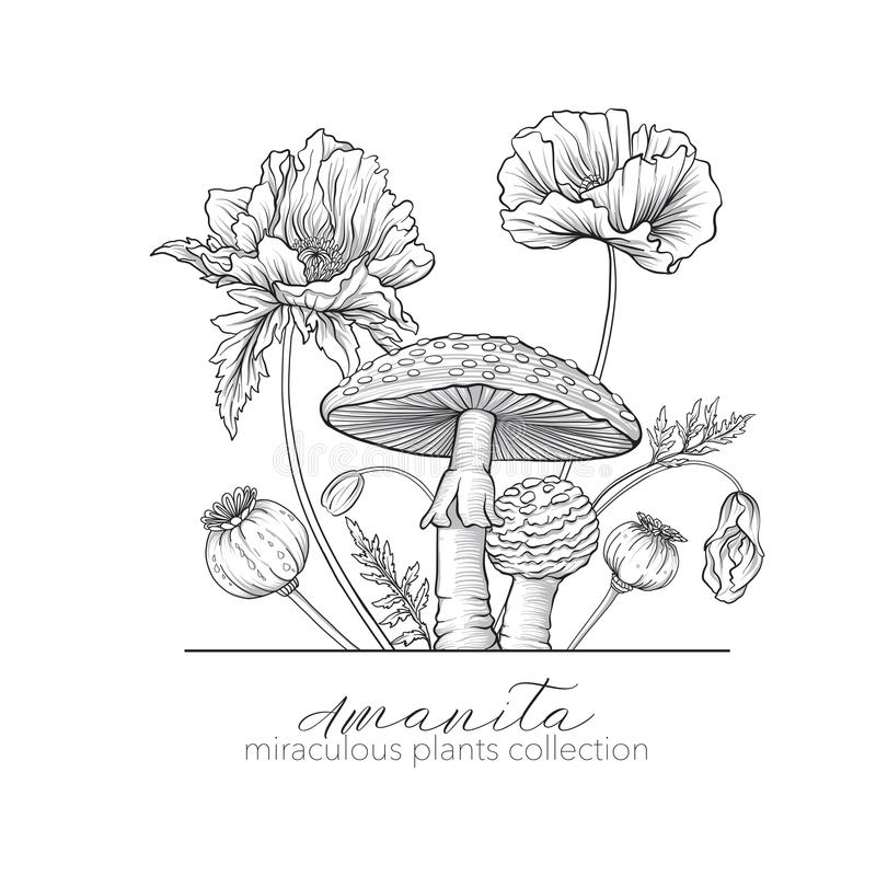 Opium poppy and amanita mushroom. Set of miraculous plants. In botanical style. Stock line vector illustration stock illustration