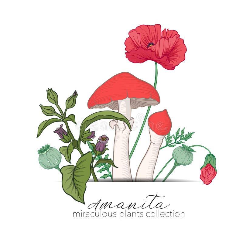 Opium poppy, belladonna and amanita mushroom. Set of miraculous. Plants in botanical style. Stock line vector illustration royalty free illustration
