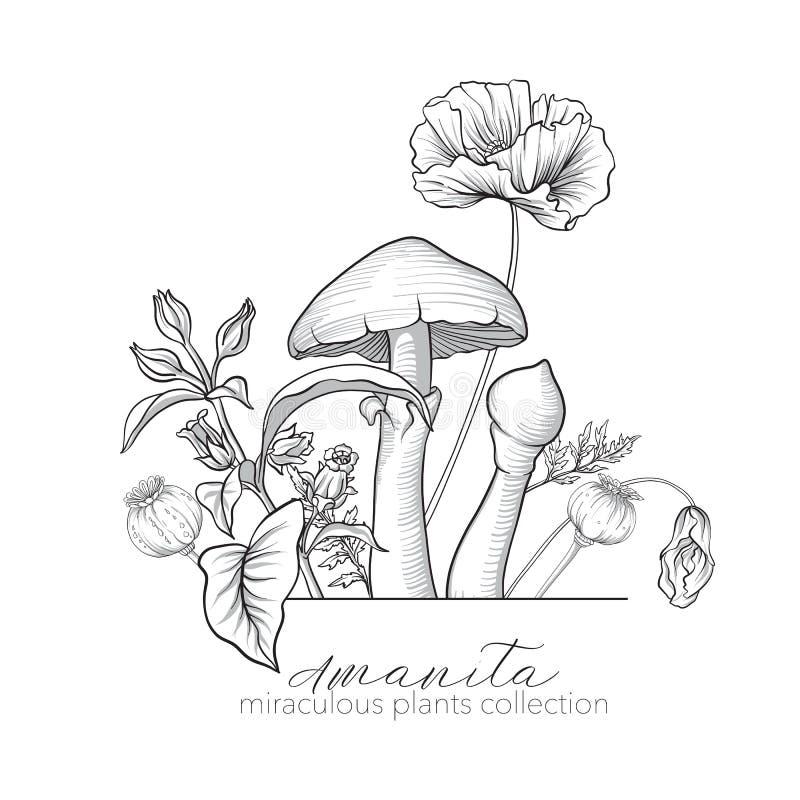 Opium poppy, belladonna and amanita mushroom. Set of miraculous. Plants in botanical style. Stock line vector illustration vector illustration