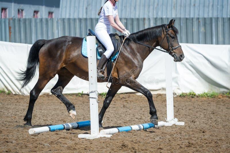 Opleidend in paardrijden, ingangsniveau Cavaletti op een draf royalty-vrije stock afbeeldingen