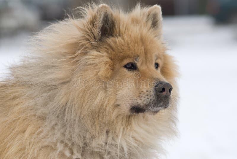 Oplettende hond royalty-vrije stock afbeeldingen