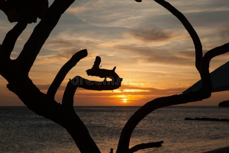 Oporto Marie Sunset - albero immagine stock