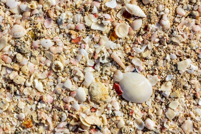 Oppervlakte van de overzeese kust van een verscheidenheid van shells, textuurachtergrond royalty-vrije stock afbeelding