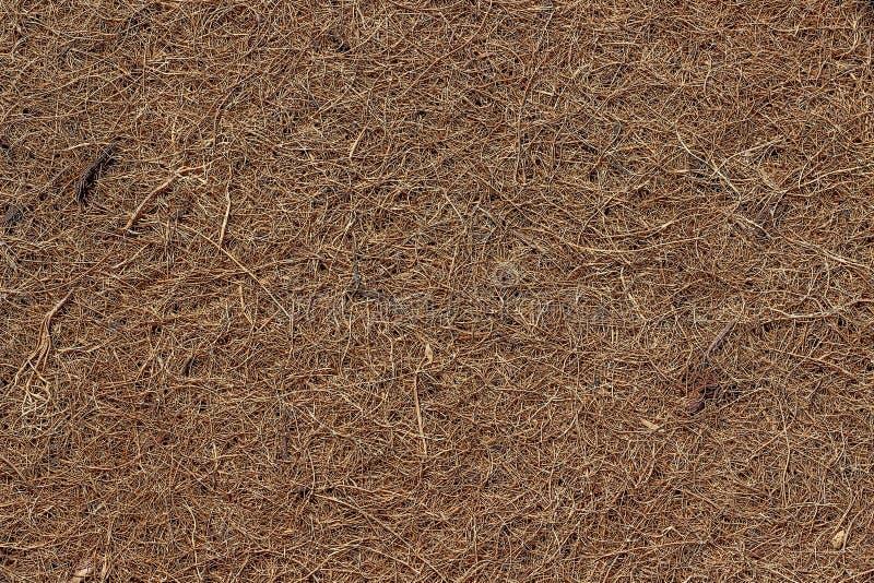 Oppervlakte van een matras van droge gedrukte kokosvezel wordt gemaakt die Backgro stock fotografie