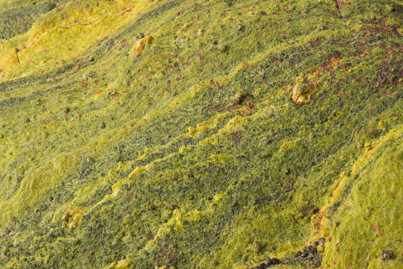 Oppervlakte van gekleurde steen Plonsen van bruin Het beschermende Schilderen royalty-vrije stock afbeeldingen