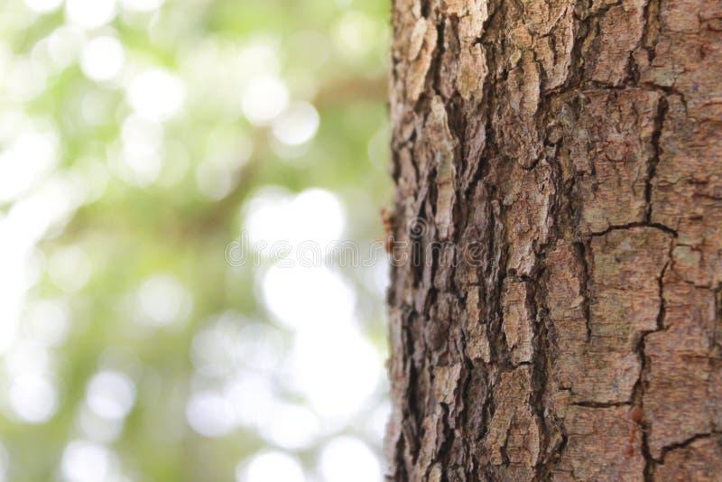 Oppervlakteboom en natuurlijke achtergrondonduidelijk beeld van bomen royalty-vrije stock afbeeldingen