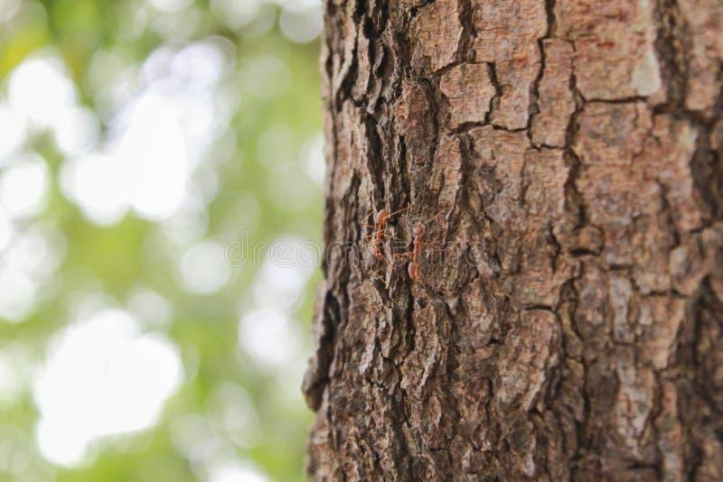 Oppervlakteboom en natuurlijke achtergrondonduidelijk beeld van bomen stock foto's