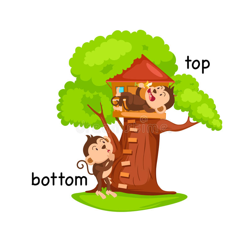 Opposite words bottom and top vector vector illustration