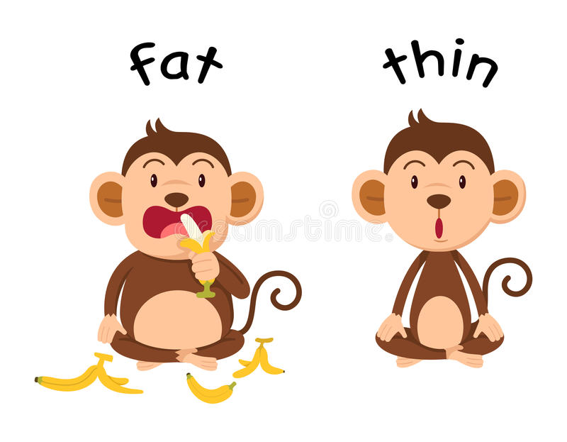 Opposite words fat and thin. Vector illustration vector illustration