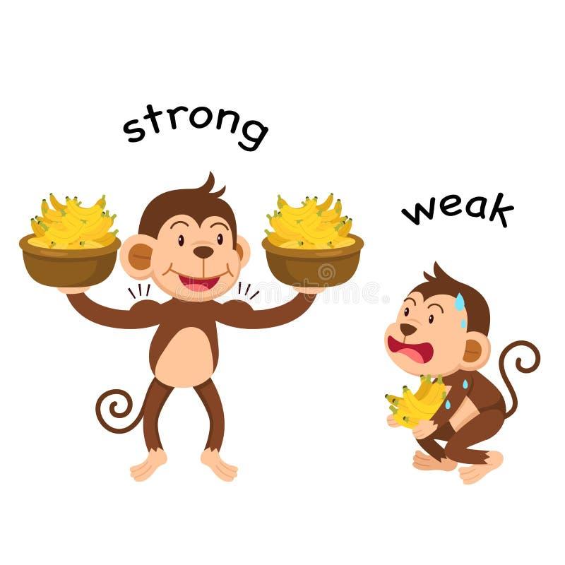 Opposite words strong and weak vector stock illustration