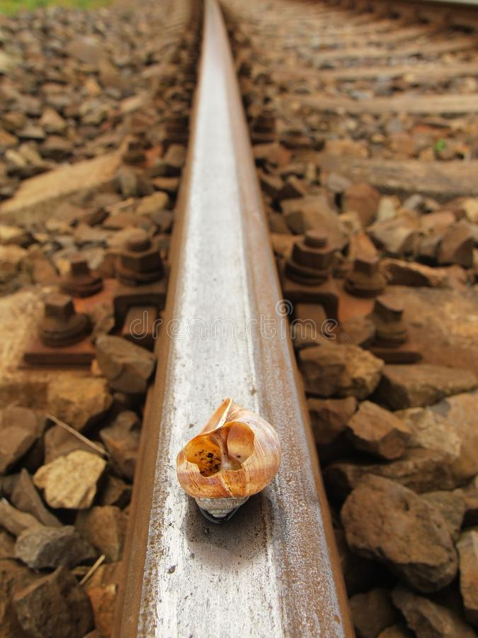 Opróżnia łamaną ślimaczek skorupę na starym ośniedziałym kolej poręczu zdjęcie royalty free