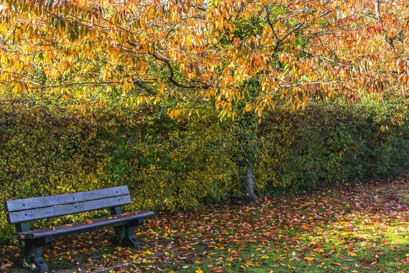 Opróżnia ławkę w luksusowym jesiennym parku zdjęcia royalty free