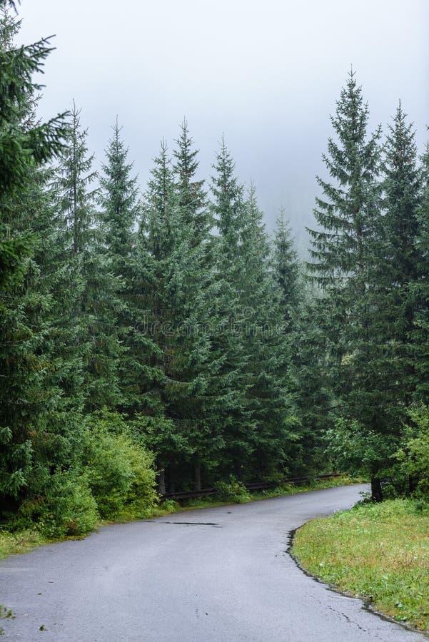 opróżnia asfaltową drogę w wsi w jesieni zdjęcia stock