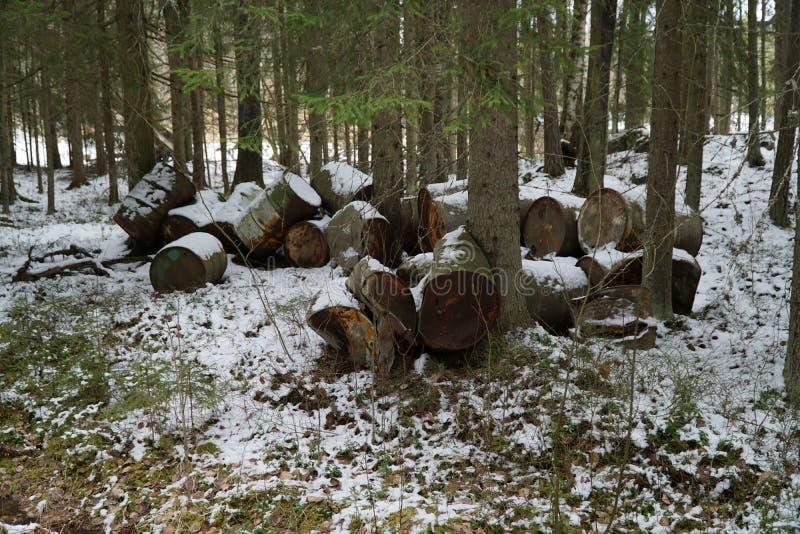 Opróżnia baryłki w lesie obraz royalty free