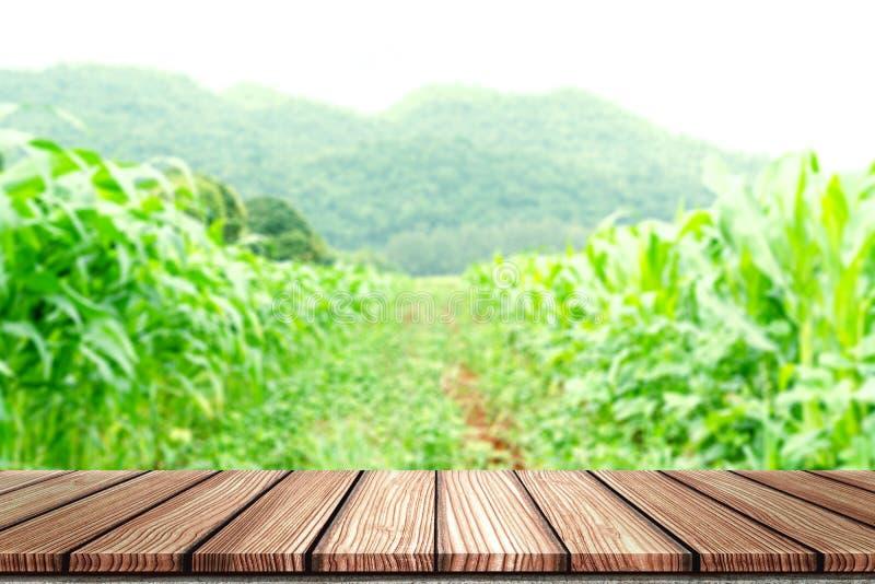 Opróżnia Drewnianej deski wierzchołka stół przed zamazanym kukurydzanego pola tłem Perspektywiczny drewno w zamazanym zielonej ku zdjęcia stock