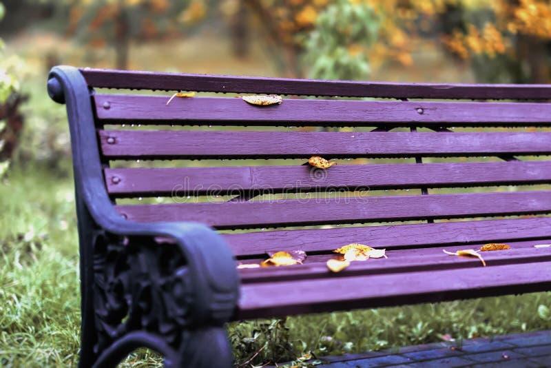 Opróżnia osamotnioną jaskrawą drewnianą fiołkową ławkę w miasto parku z suchymi pomarańczowego koloru żółtego liśćmi Jesień, sezo obraz royalty free