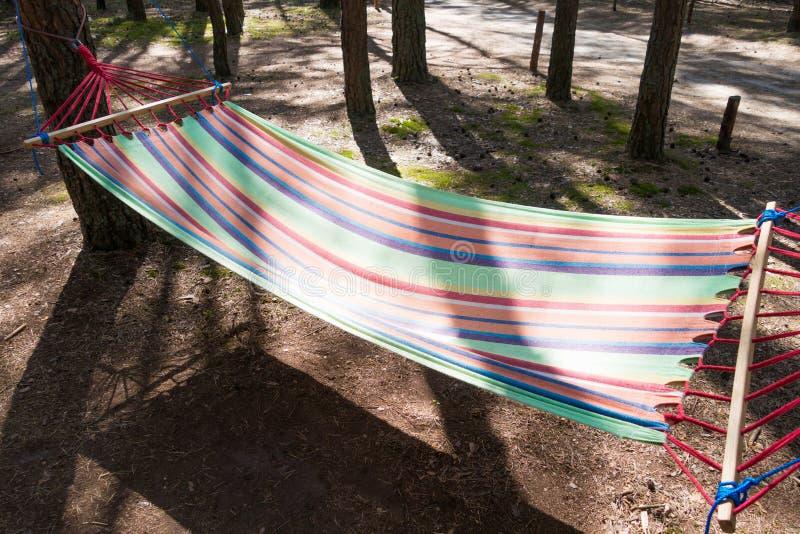 Opróżnia stubarwnego hamaka w lesie między drzewami fotografia royalty free