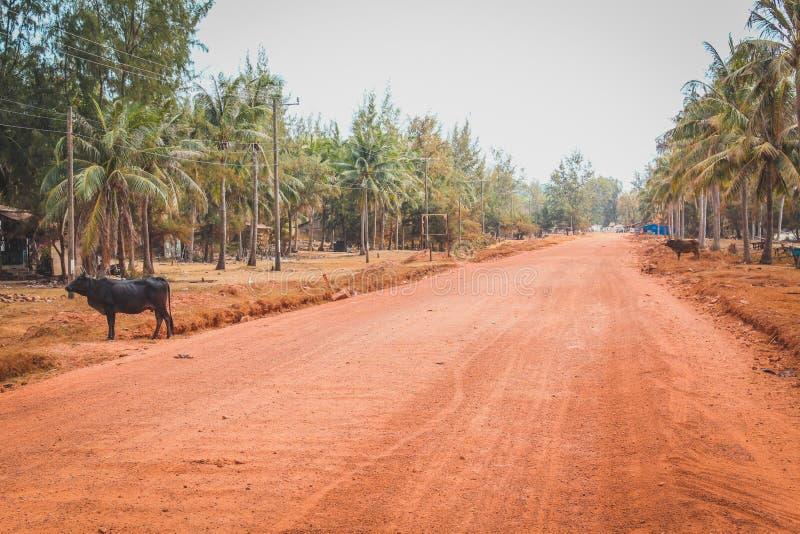 Opróżnia wiejską drogę przez drzewko palmowe krajobrazu z bizonem obrazy royalty free