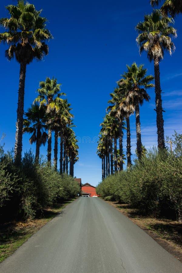 Oprijlaan door palmen wordt gevoerd die stock afbeelding