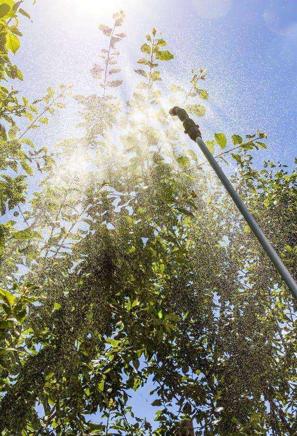 Opryskiwań drzewa przeciw zarazom zdjęcie stock