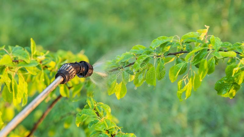 Opryskiwań drzewa z pestycydami zdjęcia royalty free