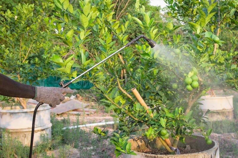 Opryskiwanie flit na wapno ogródzie obraz royalty free