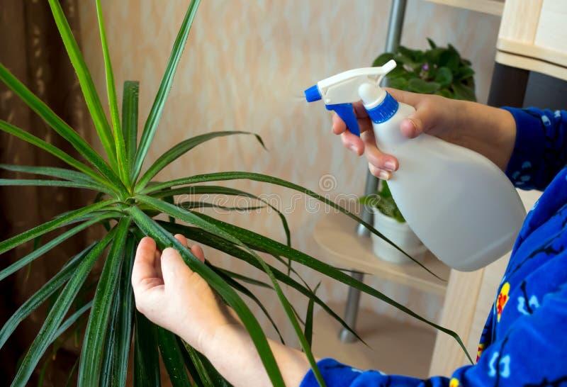 Opryskiwanie od kropidła salowe rośliny fotografia stock