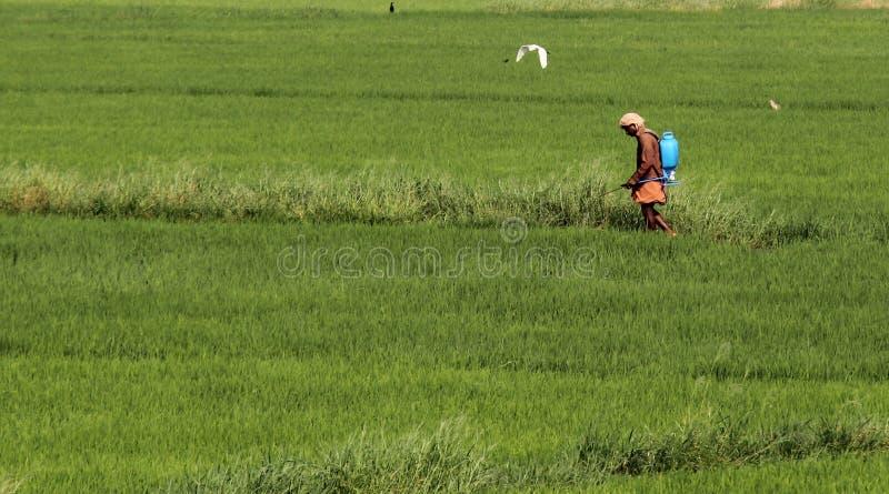Opryskiwanie pestycyd zdjęcie stock