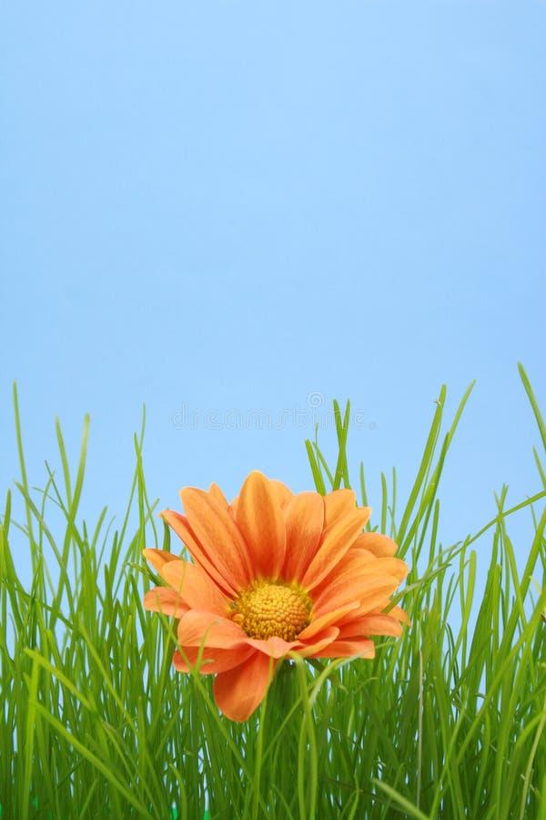 optymistą. fotografia stock