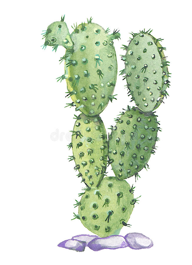 Opuntia royalty free illustration