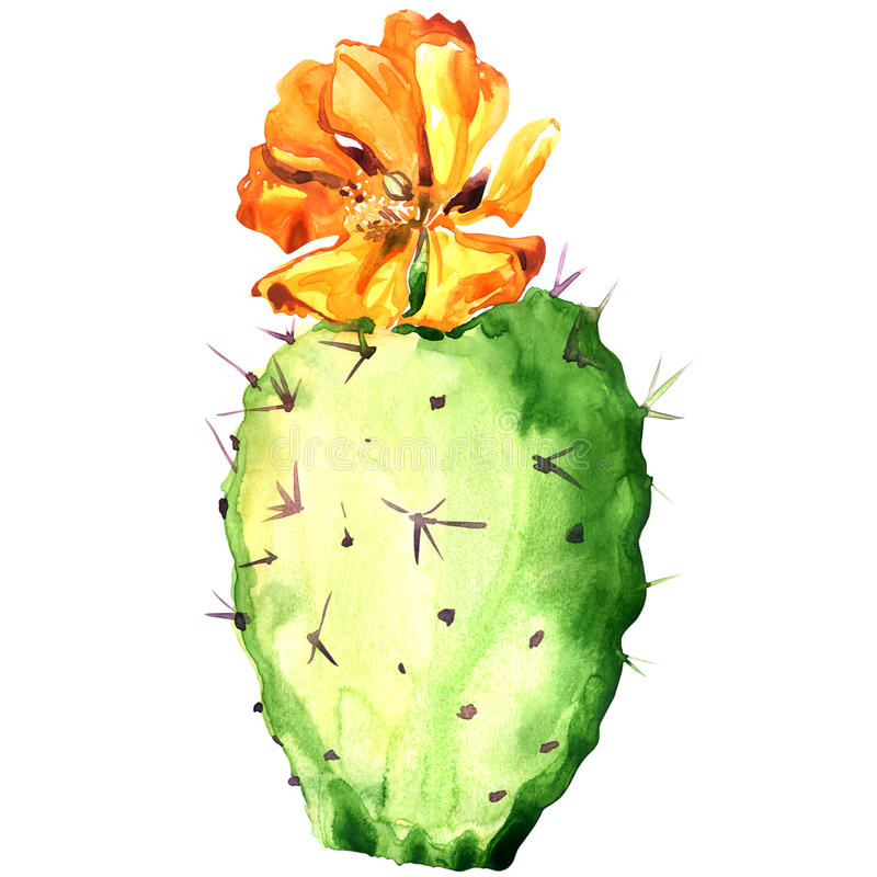 Opuntia cactus with yellow flower, watercolor stock illustration