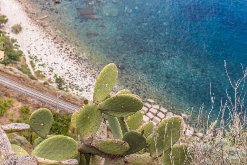 Opuntia ficus-indica photos libres de droits