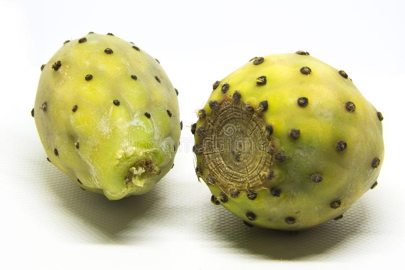 Opuntia ficus indica. Opuntia ficus-indica is a kind of cactus that is a domesticated plant plant that is important in the agricultural economy in the arid and stock images